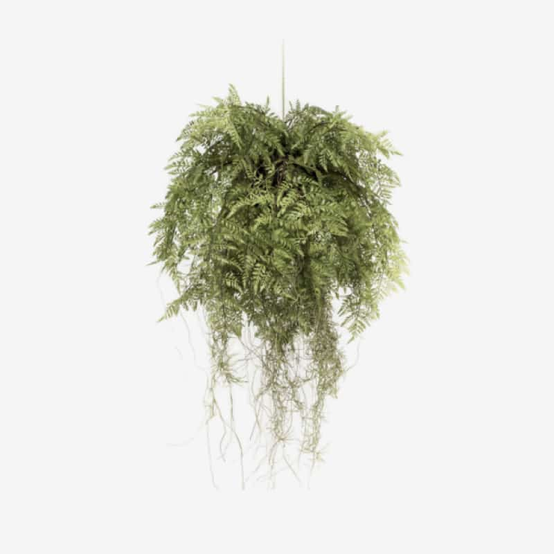 plante 001